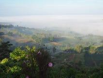 El invierno deja el sol del lihgt de la niebla imagen de archivo libre de regalías