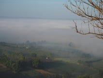 El invierno deja la niebla imagen de archivo libre de regalías