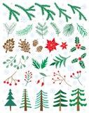 El invierno determinado del vector florece, las plantas, bayas, pinecones Ejemplo floral de la Navidad Imagen de archivo