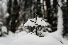 El invierno en Finlandia cubrió en nieve fotos de archivo