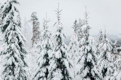 El invierno en Finlandia cubrió en nieve fotografía de archivo