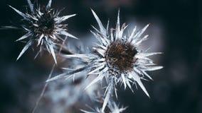El invierno está aquí foto de archivo libre de regalías