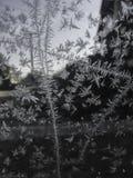 El invierno está aquí fotos de archivo