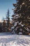 El invierno está viniendo fotos de archivo libres de regalías