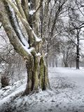 El invierno está viniendo Foto de archivo