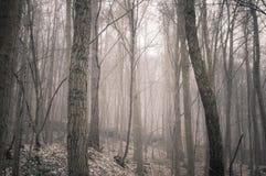 El invierno está viniendo Foto de archivo libre de regalías