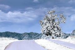 El invierno está viniendo como fondo Foto de archivo libre de regalías