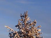 El invierno Nevado se ha colocado foto de archivo