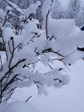 El invierno Nevado se ha colocado Imagen de archivo
