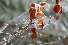 El invierno se levantó Imagen de archivo libre de regalías