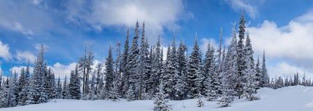 El invierno viene a la montaña de Blacktail Imagen de archivo libre de regalías