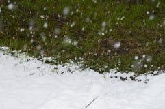 El invierno viene, se pone verde, blanco, nieva feliz Foto de archivo libre de regalías