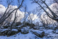 El invierno viene y las cubiertas de nieve las cuestas del bosque del ` de Herreria del ` en el EL Escorial, Madrid, España imagen de archivo libre de regalías