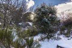 El invierno viene y las cubiertas de nieve las cuestas del bosque del ` de Herreria del ` en el EL Escorial, Madrid, España fotos de archivo libres de regalías
