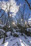 El invierno viene y las cubiertas de nieve las cuestas del bosque del ` de Herreria del ` en el EL Escorial, Madrid, España fotos de archivo