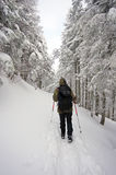 El ir de excursión del invierno Foto de archivo libre de regalías