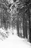 El ir de excursión en bosque Fotografía de archivo