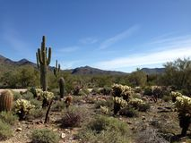 El ir de excursión en el desierto Fotos de archivo libres de regalías