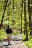 El ir de excursión a través de las maderas Fotos de archivo