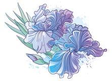 El iris florece el ejemplo del vector Imagen de archivo libre de regalías