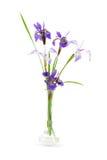 El iris púrpura florece en un pequeño florero de cristal Imagen de archivo