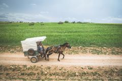 A moroccan man riding old carriage along the unpaved road beside grassland. royalty free stock photography