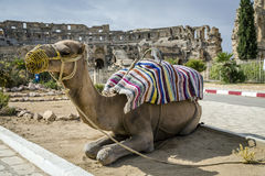 El-Jam, colosseum, Tunisia Stock Photos