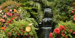 El jardín Imagenes de archivo