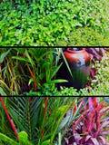 El jardín adorna Fotos de archivo