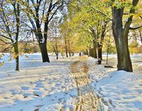 el jardín botánico en callejón del Lodz-otoño Imagen de archivo libre de regalías