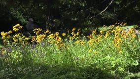 El jardín botánico en la Vitebsk almacen de video