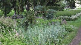 El jardín botánico en la Vitebsk metrajes