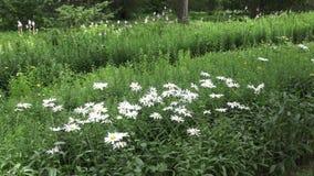 El jardín botánico en la Vitebsk almacen de metraje de vídeo