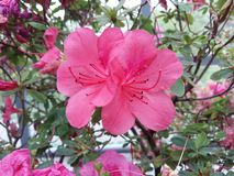 El jardín botánico principal Fotos de archivo libres de regalías