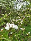 El jardín botánico principal Imágenes de archivo libres de regalías