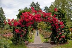 El jardín color de rosa de la prueba Fotografía de archivo
