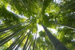 El jardín de bambú en Hokoku-ji en Kamakura, Japón fotos de archivo