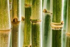 El jardín de bambú es sombrío y reservado Foto de archivo