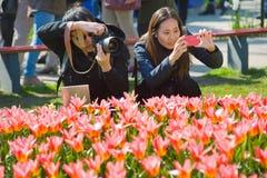 El jardín de flores del keukenhof Foto de archivo libre de regalías