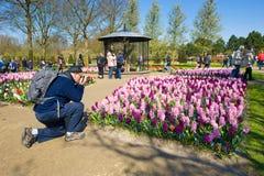 El jardín de flores del keukenhof Imagenes de archivo