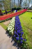 El jardín de flores del keukenhof Fotografía de archivo