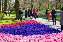 El jardín de flores del keukenhof Fotos de archivo