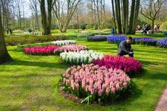 El jardín de flores del keukenhof Imágenes de archivo libres de regalías