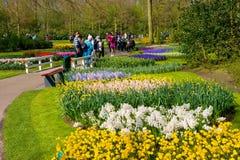 El jardín de flores del keukenhof Imagen de archivo libre de regalías