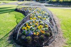 El jardín de flores ha protegido cerca cubre para arriba con la red del pájaro fotografía de archivo