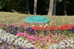 El jardín de flores de la ciudad con verano brillante florece en la calle de Vitebsk Fotos de archivo libres de regalías