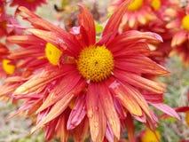 El jardín de flores parents el lado del país foto de archivo