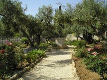 El jardín de Gethsemane Imagen de archivo libre de regalías