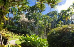 El jardín de la balata, isla de Martinica, francés las Antillas Imagen de archivo libre de regalías
