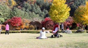 El jardín de la calma de la mañana Imagen de archivo libre de regalías
